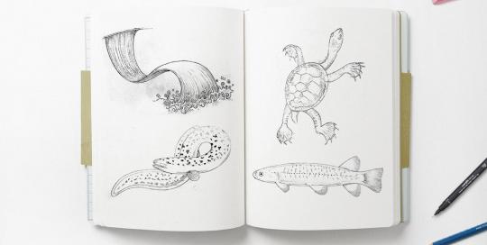 fauna illustration sketchpad mockup